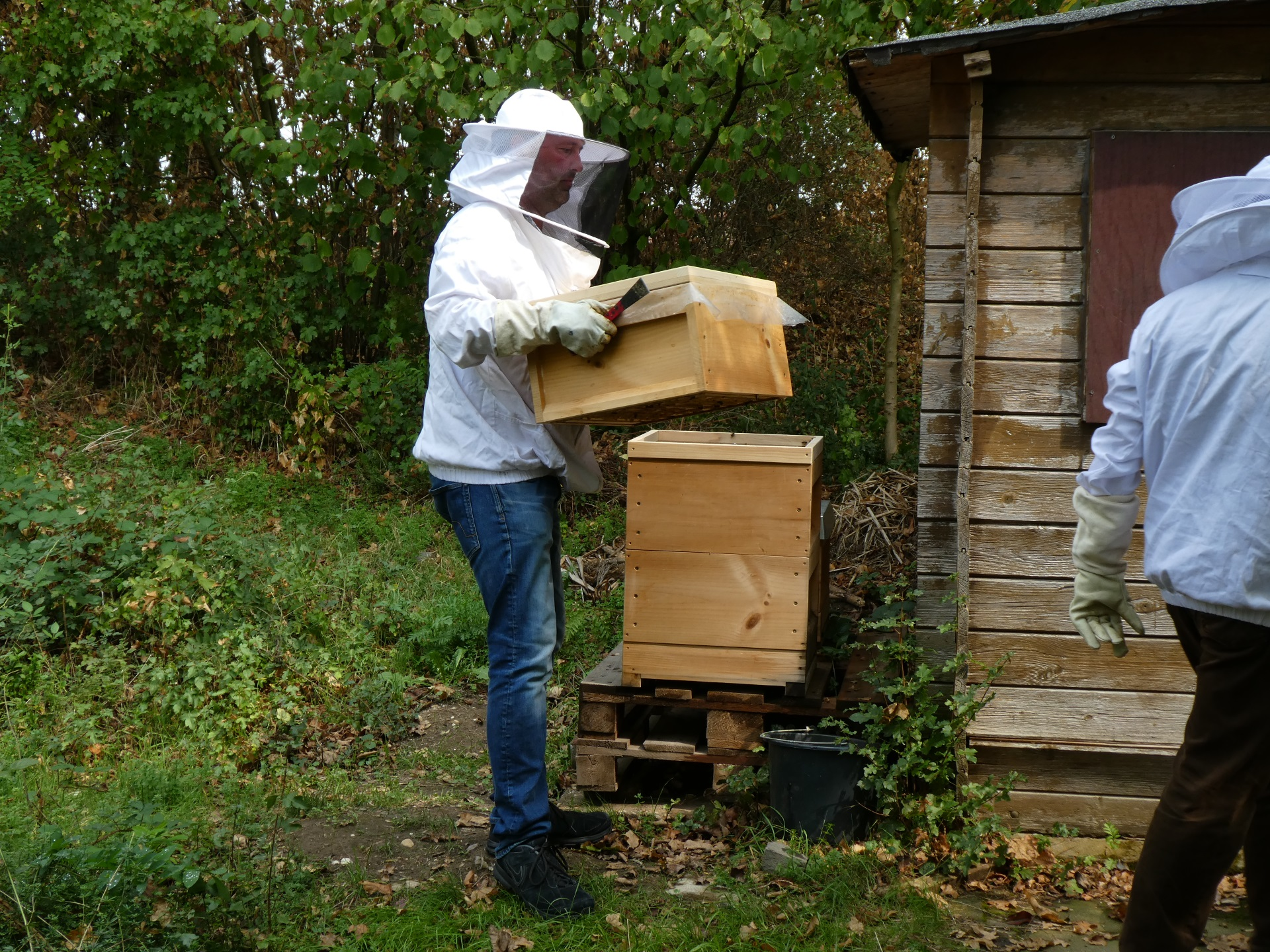 Schulimkerei (Bienen AG) erhält innogy Klimaschutzpreis